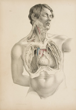 The Form of the Thorax..., color lithograph from Joseph Maclise, Surgical Anatomy, Philadelphia, 1851. Hartford Medical Library.