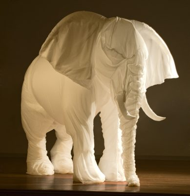Lynn, White Elephant