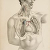 Anatomically Correct: Medical Illustrations, 1543-2008
