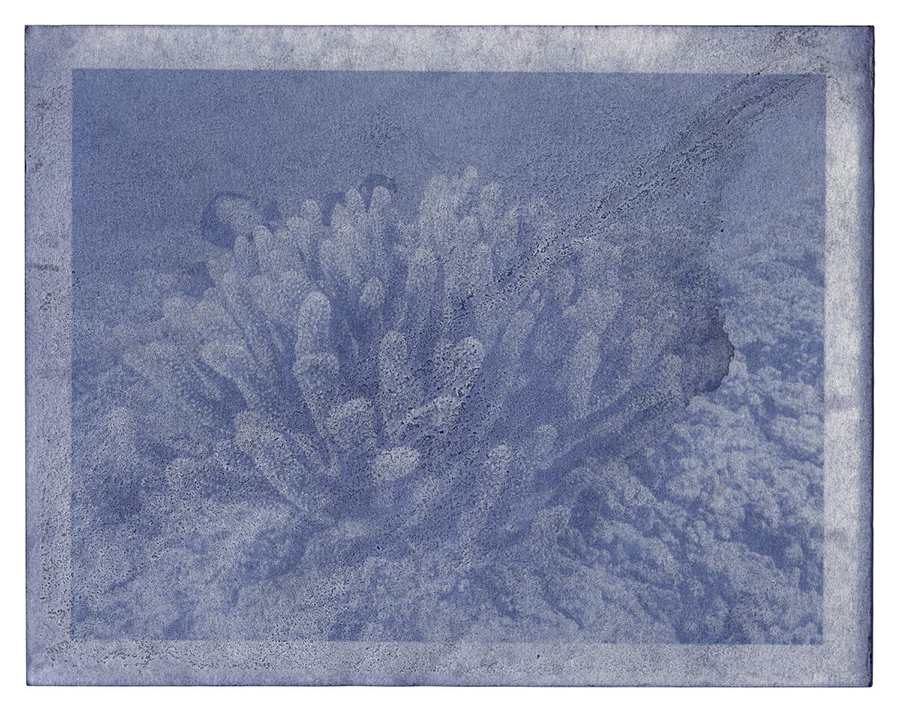 """Fading Reefs 9 (2020) Anthotype made with blackberries, 7"""" x 9""""."""