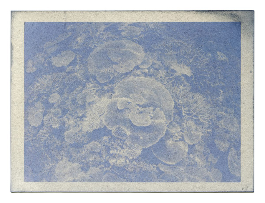 """Fading Reefs 5 (2020) Anthotype made with red cabbage, 4.5"""" x 6""""."""
