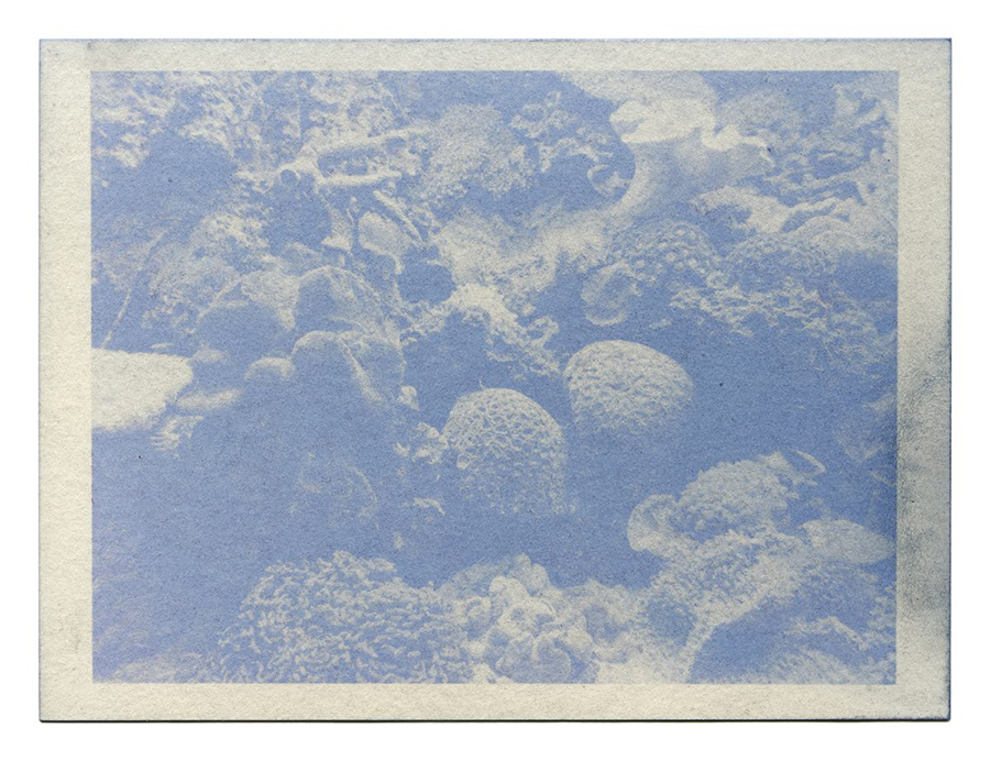 """Fading Reefs 6 (2020)  Anthotype made with red cabbage, 4.5"""" x 6""""."""