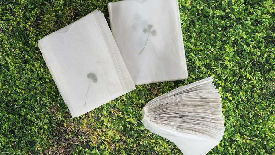 """Codex of Clovers (2019). Glue bound glassine envelopes with individual pressed clovers, 4"""" x 5""""."""