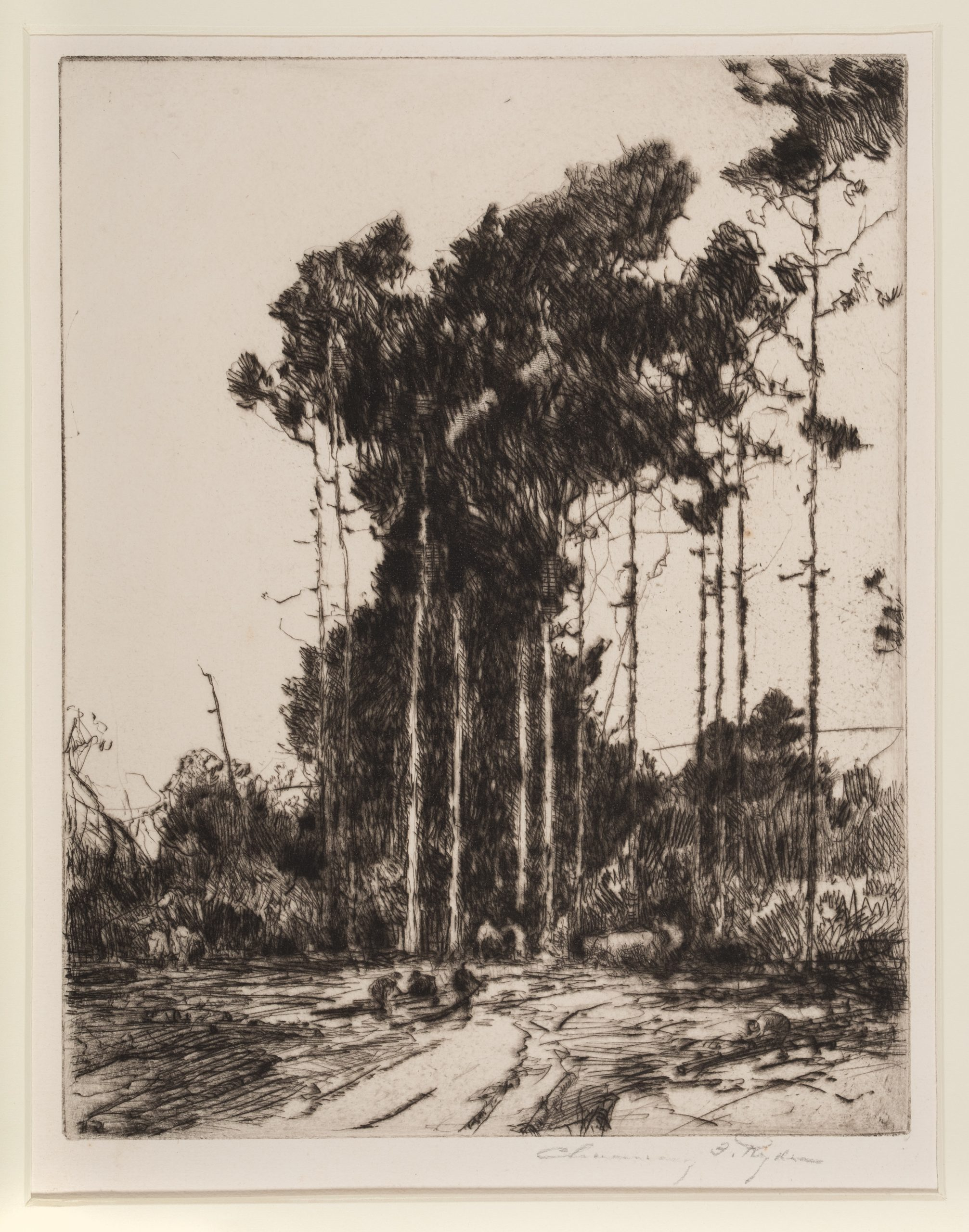 Chauncy Foster Ryder, Cutting the Pines